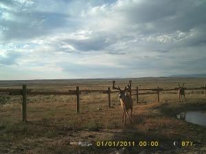 rd deer 1