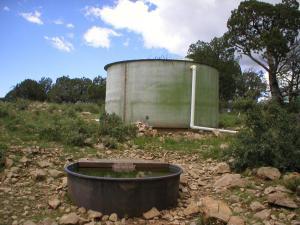 #435 Sombrero Trick Tank (NM)