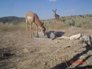 #323 Larsen's Guzzler Research I (UT) - Trail Cameras