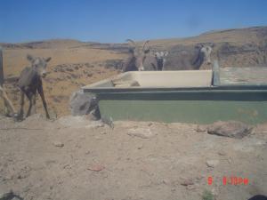 #331 Larsen Guzzler Research II (UT) - Trail Cameras