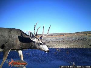 #444 Ruby Knolls Water Development (WY) - Trail Camera