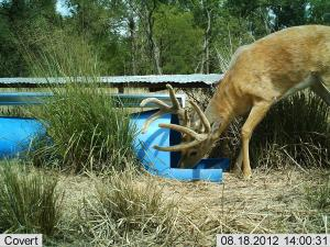 #425 Benefits of Water Developments on Wildlife in Western Kansas Research Study (KS) - Trail Cameras