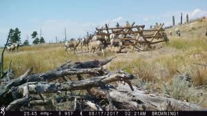 #443 Elk Mountain Water Development #1 (WY) - Trail Camera