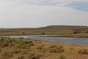 #384 Antelope Springs #2 (WY)