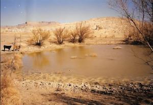 #257 East Clark Bench Pronghorn Water 2000 (UT)