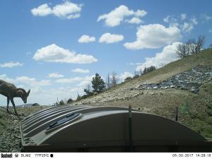 #441 Seminoe Mountain/Indian Pass Guzzler (WY) - Trail Camera