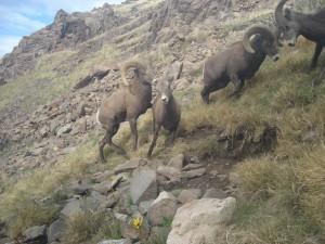 Utah Trail Cams (10)