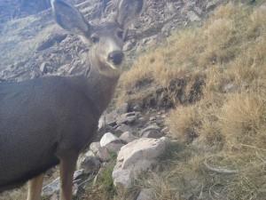 Utah Trail Cams (13)