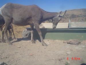 Utah Trail Cams (16)