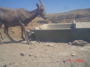 Utah Trail Cams (17)