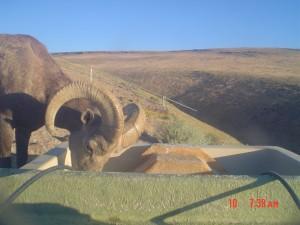 Utah Trail Cams (18)
