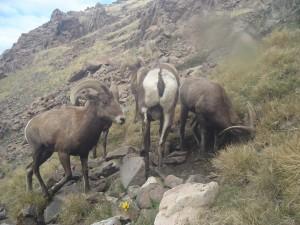Utah Trail Cams (2)