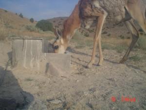 Utah Trail Cams (22)