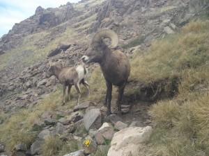 Utah Trail Cams (3)