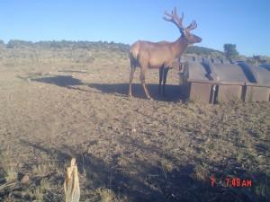 Utah Trail Cams (4)