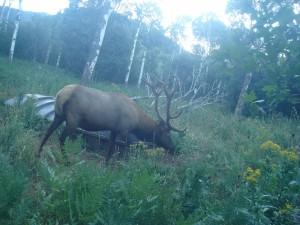 Utah Trail Cams (5)