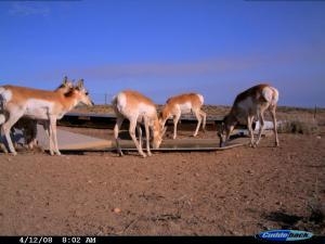 #159/160 Blue Mesa Guzzlers 1 & 2 -Trail Camera (WY)