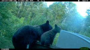 Miscellaneous Trail Camera Photos