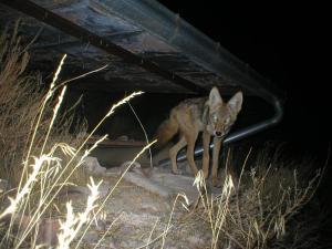 #274 Utah Guzzler Study (UT) - Trail Cameras