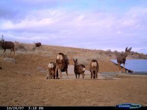#173/174 Squaw Teats Guzzlers 1 & 2 (WY) - Trail Camera