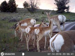 #439 Ed O. Taylor WHMA Wildlife Facilities (WY) - Trail Camera